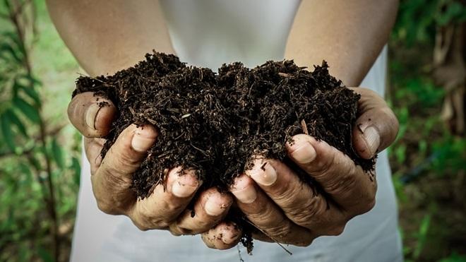 humus o anche detto compost
